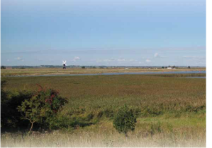 Visit on a clear day and you can see right across the Burgh Castle marshes