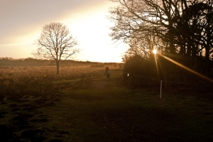 The sun going down on a winter's day in Redgrave and Lopham fen. Credit: Javier Delgado Esteban