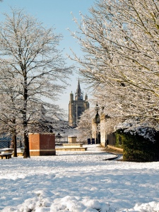 The tower of St Peter Mancroft seen through Castle Mall Gardens, Norwich, yesterday morning. Credit: Gerry Balding